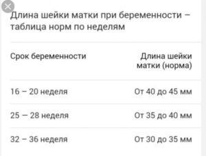 Норма длины шейки матки 31 неделя