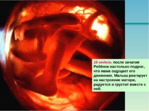 Пол ребенка сердцебиению 19 недель