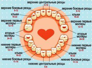 Во сколько начинают резаться зубки у ребенка