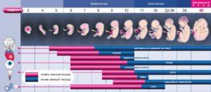 Все недели беременности что происходит