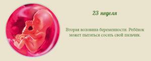 23 недели и 4 дня беременности