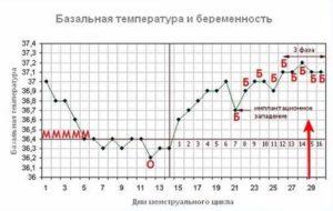 Температура на 36 неделе беременности