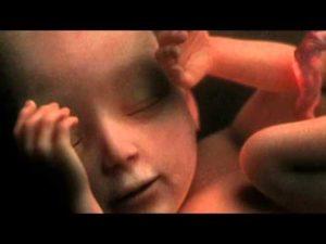 30 Недель беременности видеогид