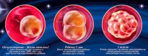 1 Неделя после зачатия происходит