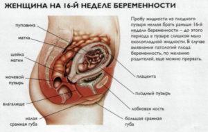 Боли на 16 неделе беременности