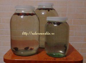 Березовый сок заготовка в домашних условиях