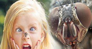 Ребенок боится мух что делать