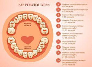 Первый зубик во сколько месяцев появляется