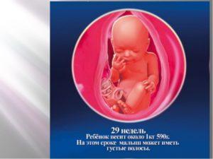 28 29 Недель беременности вес ребенка
