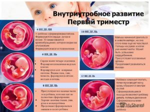 Как выглядит беременность в 2 недели