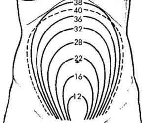 Размеры матки на 8 неделе беременности