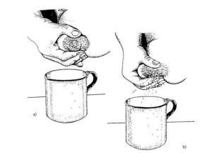 Как сцеживаться правильно руками?