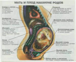 40 Неделя беременности повторнородящих