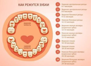 Во сколько режутся первые зубки у детей