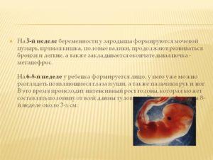 5 неделя от зачатия беременности ощущения