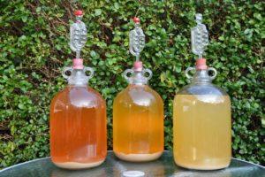 Алкогольные напитки из березового сока