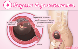 Первые признаки беременности на 4 неделе