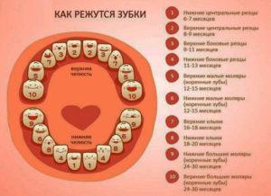 В каком возрасте появляются зубы у ребенка
