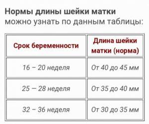 Длина шейки матки 13 недель норма