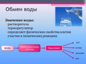 Роль воды в обмене веществ и энергии