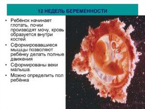Кровь на 12 неделе беременности
